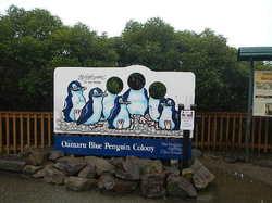 penguin16020601.JPG